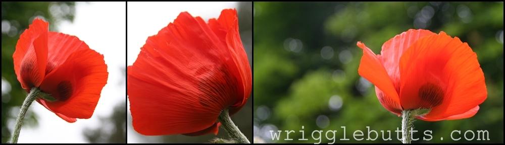 The WriggleButts